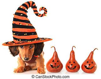 halloween, puppy