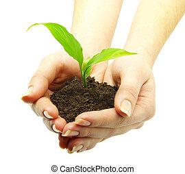 hand, plant