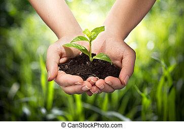 handen, achtergrond, gras, -, plant