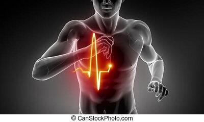 hart, het spoor van de impuls, man lopend