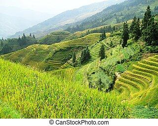 helling, rijst, terrassen, azie