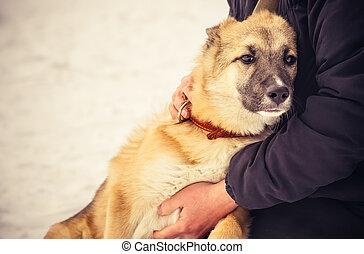 herdershond, concept, levensstijl, dog, het koesteren, buiten, vrouw, puppy, vriendschap