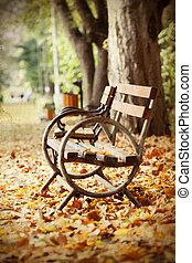 herfst, bankje, park, houten