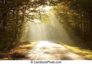 herfst, bekoorde, dageraad, bos