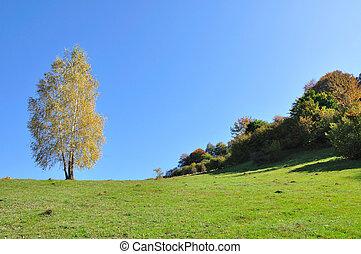herfst, berg landschap, bos, kleurrijke