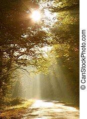 herfst bos, straat, morgen