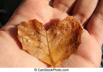 herfst, hart, blad