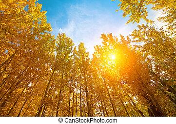 herfst, jaargetijden, esp, bomen