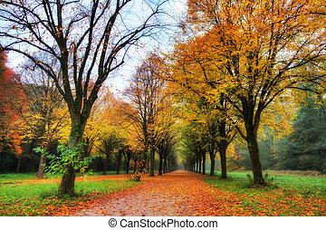 herfst, laan, gekleurde