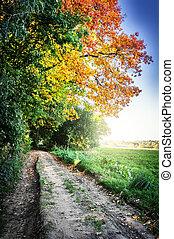 herfst, land, landscape, straat