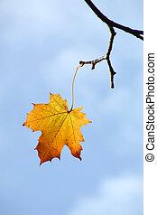 herfst, leest, blad