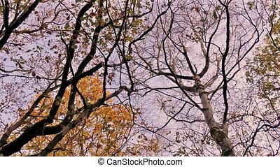herfst, mooi, ondergaande zon , bomen, boven