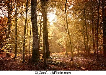 herfst, nieuw bos, landscape