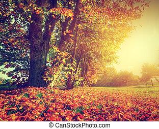 herfst, park, landscape, herfst