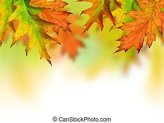 herfst, seizoen