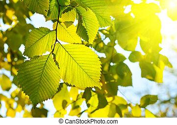 herfst, seizoenen, behang