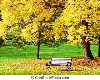 herfst, stad park, esdoorn, bankje