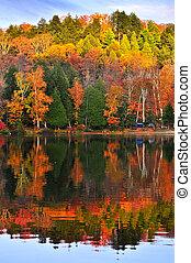 herfst, weerspiegelingen, bos
