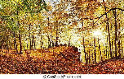 herfst, zon, bos, landcape