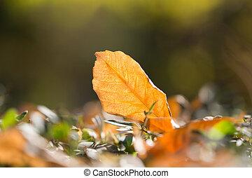 herfstblad, natuur