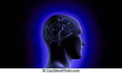 hersenen, video