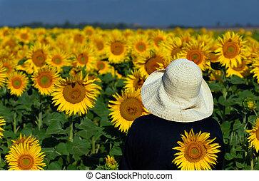het kijken, zonnebloemen