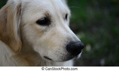 het knipogen, dog