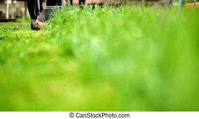 het maaien, gras