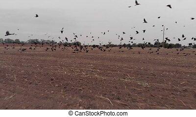 het opstijgen, vlucht, vogels