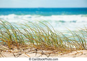 het overzien, duin, groen gras, strand, zanderig