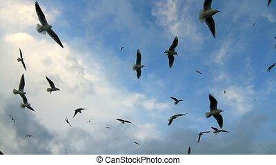 het stijgen, vlucht, vogels