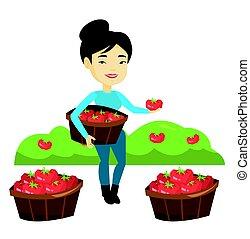 het verzamelen, vector, illustration., tomaten, farmer
