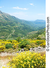 heuvels, eiland, gele, lefkada, groene, bloemen, bloem