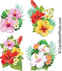 hibiscus, bloemen, regeling