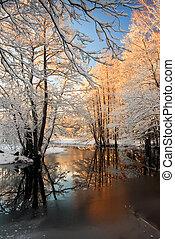 hoarfrost, winters, bomen