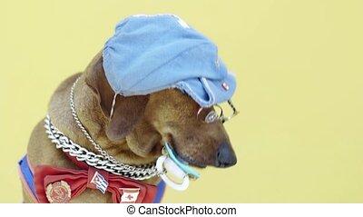 hoedje, dog, worst, pacifier