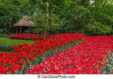 holland, tulpen, lisse, park, kleurrijke, rood, keukenhof