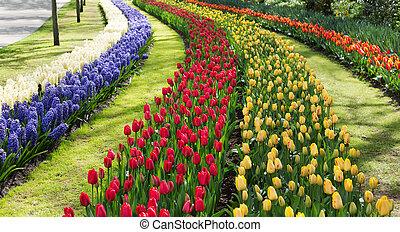 holland., tulpen, park., keukenhof