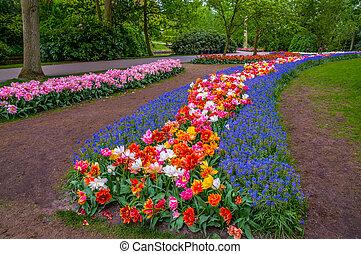holland, wegen, lisse, park, bloemen, kleurrijke, keukenhof