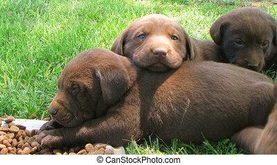 hondjes, laboratorium, het rusten