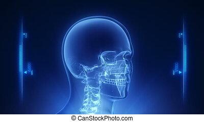 hoofd, menselijk, rontgen, scanderen