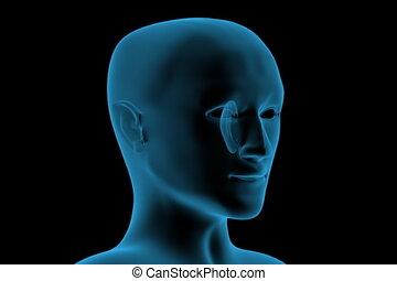 hoofd, transparant, menselijk, 3d