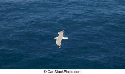 hoog, of, high., vogel, vakantie, het stijgen, vliegen, season., reizen, blauwe , vlucht, twee, seagulls, insecten, perfect, cloudless, trends., zoeken, vlieg, sky., gulls, fish., piek, vogels