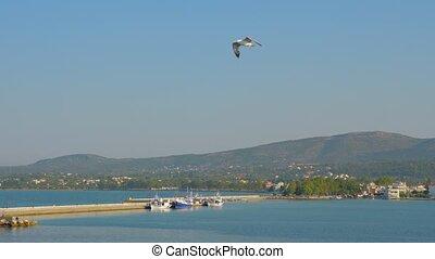 hoog, toerisme, flight., vogel, zeevogel, het stijgen, vliegen, tegen, blauwe , europe., 4k, griekenland, cloudless, wild, zeemeeuw, sky., flying., gull, vogels