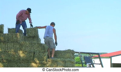 hooi, inlading, landbouwers