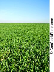 horzon, verstand, blauwe hemel, gras, groene