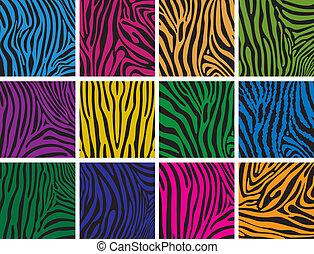 huid, kleurrijke, texturen, set, zebra, vector