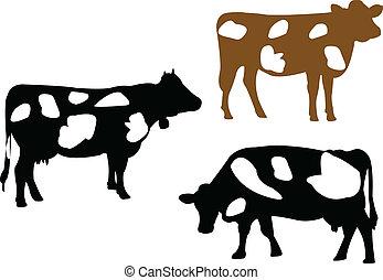 illustratie, koe