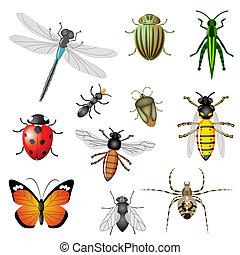 insecten, of, insecten
