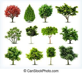 isolated., set, bomen, vector